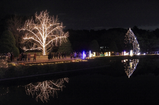 京都植物園イルミ ②