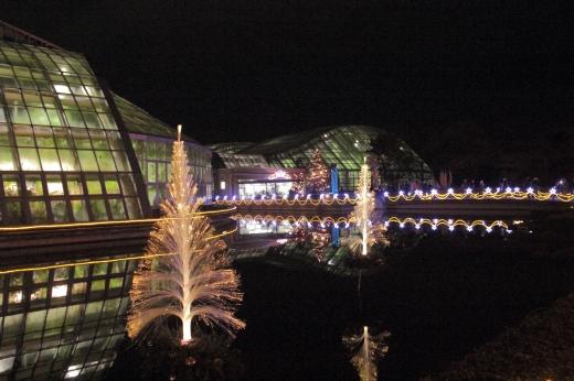 京都植物園イルミ ③