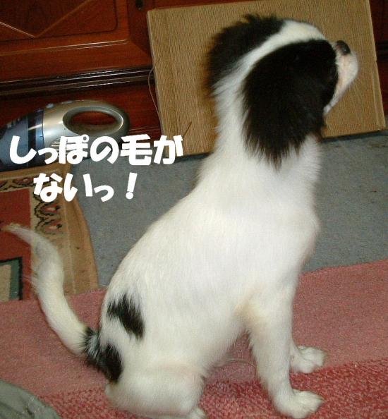 2011_06070074.jpg