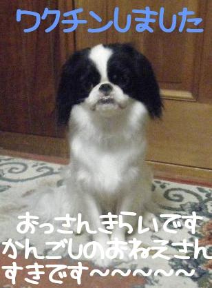 2011_09140077.jpg