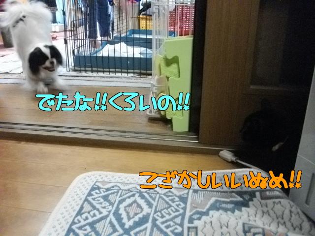 2012_03280022.jpg
