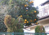 10 002柑橘