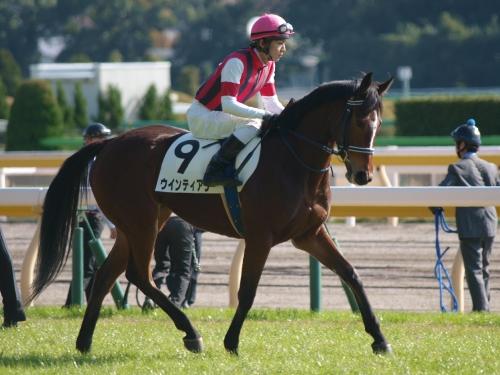 ウインティアラ、返し馬