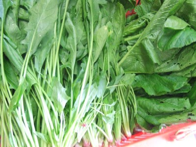 2010_0610ホウレン草、小松菜
