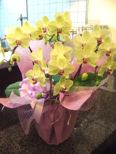 2010_0620我妻先生蘭の花