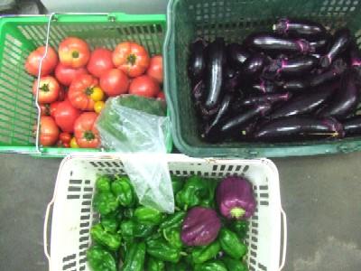 2010_0629自家菜園野菜