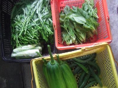 2010_0701野菜その1
