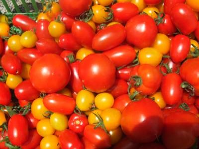 2010_0715プチトマト