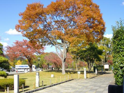 駿府公園の紅葉1