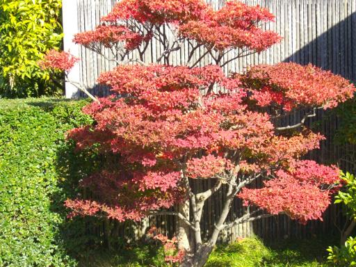 駿府公園の紅葉3
