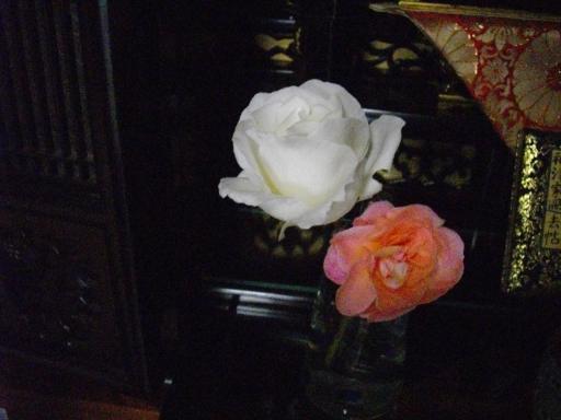仏前の供えたバラ
