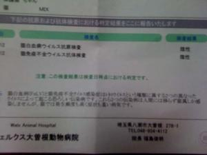 IMG_9249[1]