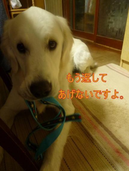 11232-1_convert_20111124004016.jpg