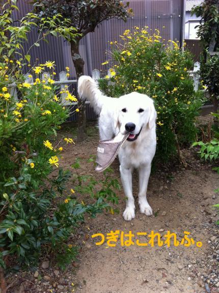 muku7+005-1_convert_20111011213015.jpg