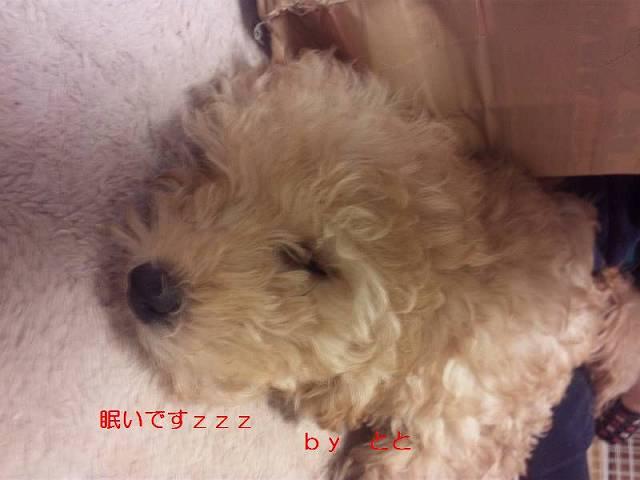DVC00419.jpg