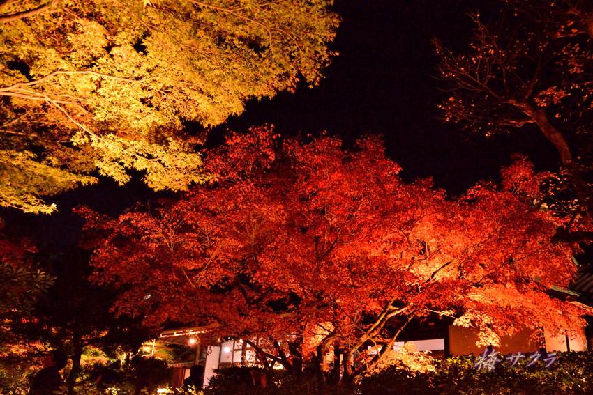 京都13(2変更済