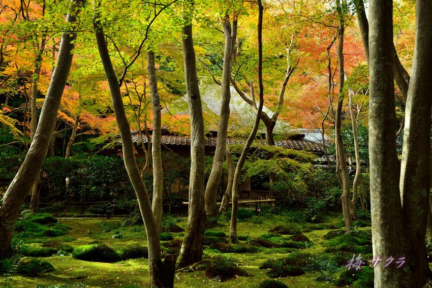 京都14(2)変更済