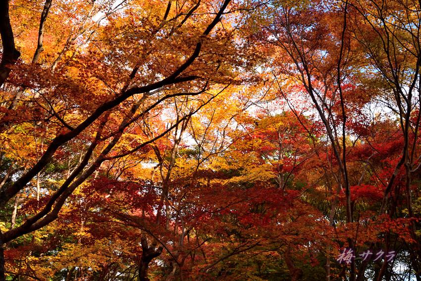京都14(7)変更済