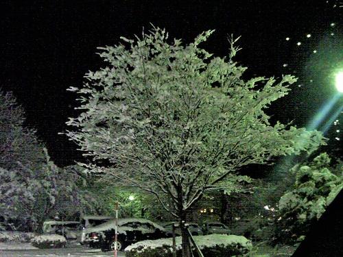 雪の花1206