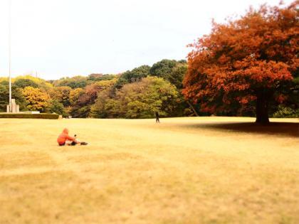 明治神宮 紅葉