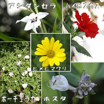 0802-11花