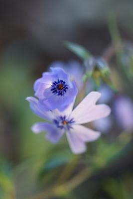 0119-7芝桜