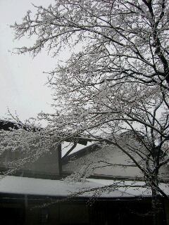 yukikeshiki.jpg