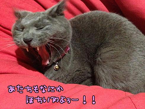 IMG_0344_convert_20131112190113.jpg