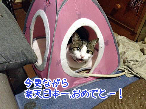 IMG_0608_convert_20131112190516.jpg