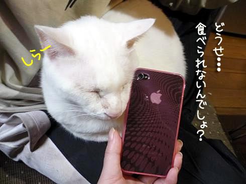 ぶーちゃんとiPhone1