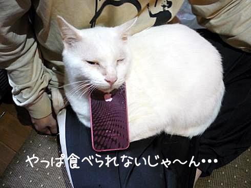 ぶーちゃんとiPhone2