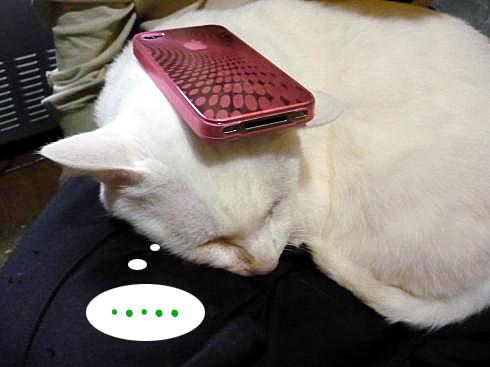 ぶーちゃんとiPhone頭