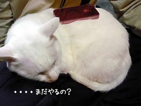ぶーちゃんとiPhone背中