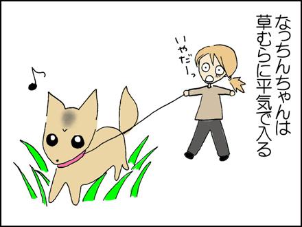なっちんちゃんは平気で草むらに入る