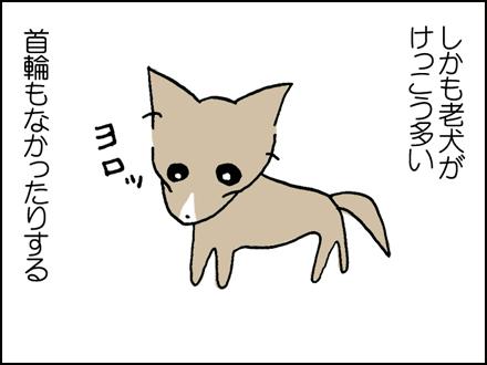 203老犬はかわいい-3