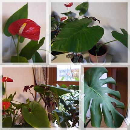 観葉植物2013