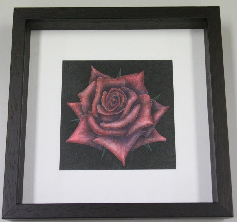 66 Modern Rose[HT] 野ちり子