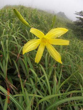 2009.8.22涌蓋山 (36)s