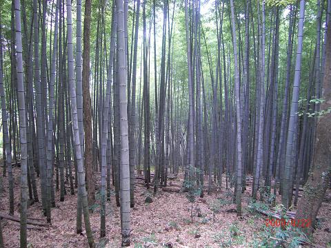2009.9.20月出山岳 (4)s