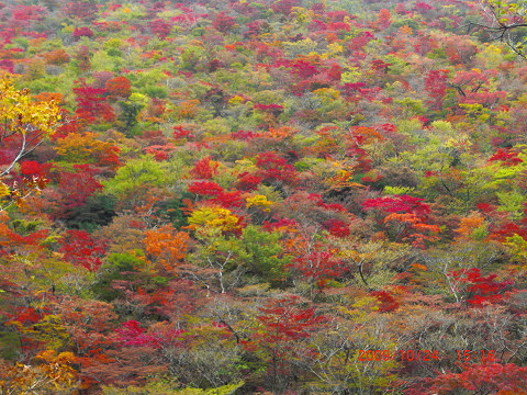 2009.10.24岳麓寺コース (87)s
