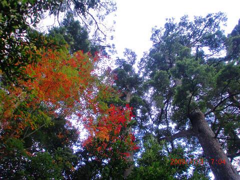 2009.11.3傾山 (5)s