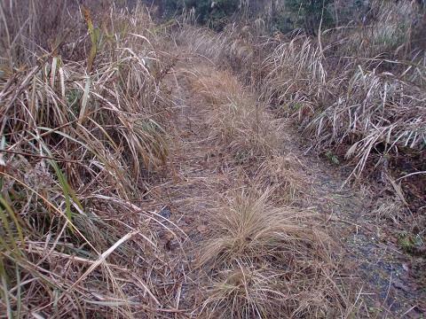 2010.1.11矢筈岳 (8)s