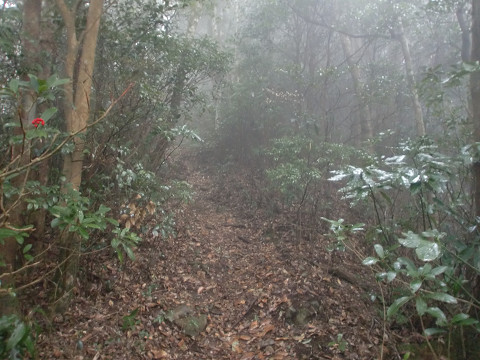 2010.1.11矢筈岳s