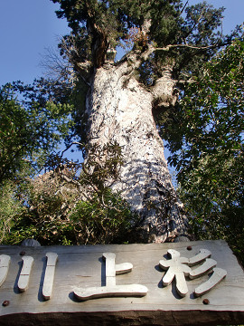2010.3.21宮之浦岳・永田岳・黒味岳 (165)s