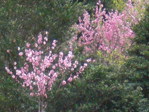 2010.3.27八郎岳 (19)s