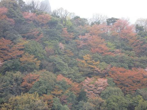 2010.4.10津波戸山 (57)s