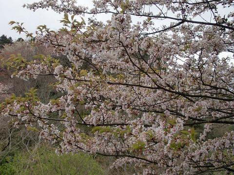 2010.4.10田原山(鋸山) (8)s