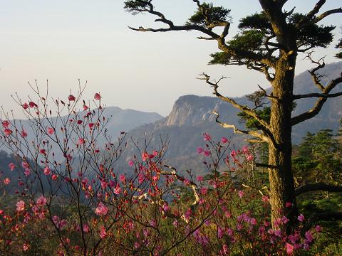 2010.4.29夏木山 (26)s