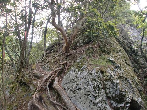 2010.6.6扇山 (1)s