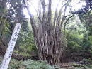 10.10.30檜原山